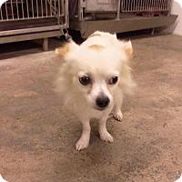 Adopt A Pet :: Sam - Upper Sandusky, OH