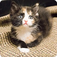 Adopt A Pet :: Amy - Chicago, IL