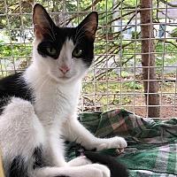 Adopt A Pet :: Karla - Toms River, NJ