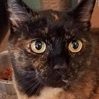 Adopt A Pet :: Florence - Cambridge, MD
