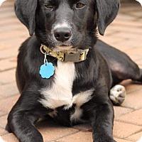 Adopt A Pet :: Moony - SOUTHINGTON, CT