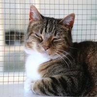 Adopt A Pet :: Bongo - Winona, MN