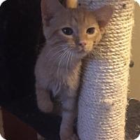 Adopt A Pet :: Basil & Berry- Brothers - Arlington, VA