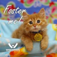 Adopt A Pet :: Foster Me! - Milwaukee, WI