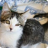Adopt A Pet :: Ines - Ann Arbor, MI
