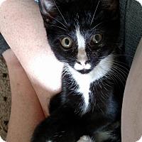 Adopt A Pet :: Oscar - Mt Pleasant, PA
