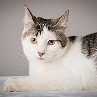 Adopt A Pet :: Darcy - Lambertville, NJ