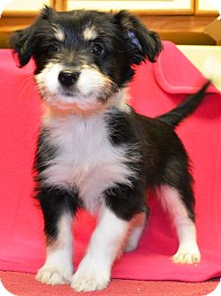 Terrier (Unknown Type, Small) Mix Puppy for adoption in Wilmington, Delaware - Phoebe