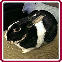 Adopt A Pet :: Lucy - Williston, FL