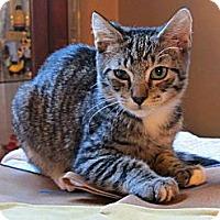 Adopt A Pet :: Timmy - Raleigh, NC