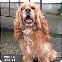 Adopt A Pet :: Zorro - Tacoma, WA
