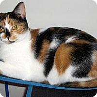 Adopt A Pet :: Cybil - Richmond, VA