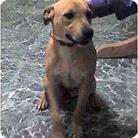 Adopt A Pet :: Lora - Clementon, NJ