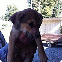 Adopt A Pet :: Denver - Peru, IN