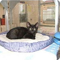 Adopt A Pet :: Yoshi - Winter Haven, FL