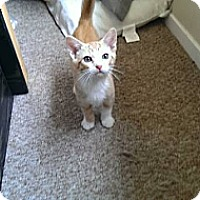 Adopt A Pet :: Strawberry - Lakewood, CA