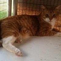 Adopt A Pet :: Argo - Visalia, CA