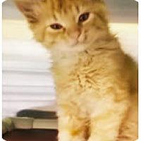 Adopt A Pet :: Sparky - Edmonton, AB