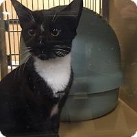 Adopt A Pet :: Dexter - Monroe, GA