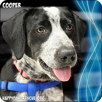 Pointer/Coonhound Mix Puppy for adoption in South Plainfield, New Jersey - Cooper
