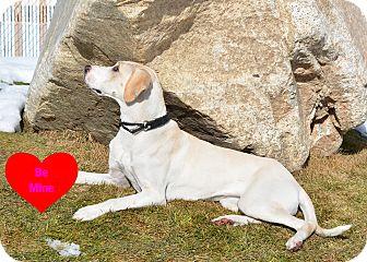 Labrador Retriever/Treeing Walker Coonhound Mix Dog for adoption in Ogden, Utah - Luna