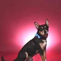 Adopt A Pet :: Max - Jackson, TN