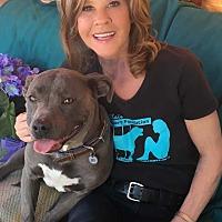 Adopt A Pet :: Eva - Toluca Lake, CA