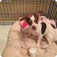 Adopt A Pet :: Lucas - Mesa, AZ