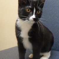Adopt A Pet :: Cecelia - Monroe, WI