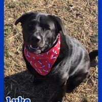 Adopt A Pet :: Luke the Second :) - Jasper, IN