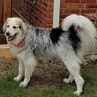 Adopt A Pet :: Jeannette - Kyle, TX