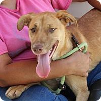 Adopt A Pet :: Lola - Yardley, PA