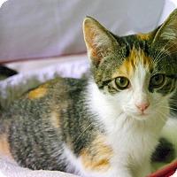 Adopt A Pet :: Sprite - Little Rock, AR