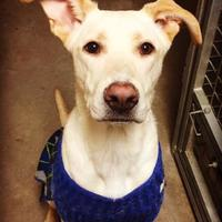 Adopt A Pet :: Ginny - Richmond, IN
