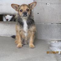 Adopt A Pet :: Leo - Kokomo, IN
