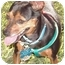 Photo 1 - Miniature Pinscher Mix Dog for adoption in Los Angeles, California - Lolita (Lucy)