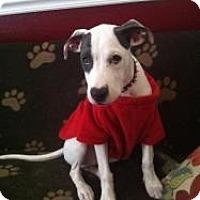 Adopt A Pet :: Oscar - Justin, TX