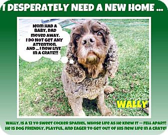 Cocker Spaniel Mix Dog for adoption in Wantagh, New York - Wally