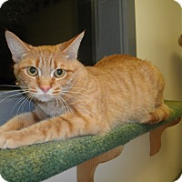 Adopt A Pet :: Adora - Milwaukee, WI