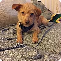 Adopt A Pet :: Einstein - VIDEO! - Los Angeles, CA