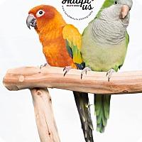 Adopt A Pet :: Kiwi and Papaya - Stratford, CT