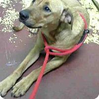 Adopt A Pet :: CARLA - Atlanta, GA