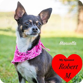 Chihuahua Mix Dog for adoption in San Leon, Texas - Manuella