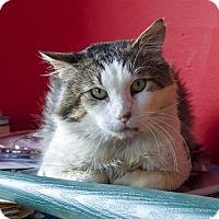 Adopt A Pet :: Eddie - Oakland, CA