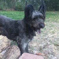 Adopt A Pet :: Moxie Midnight - Kansas City, MO