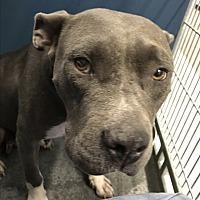 Adopt A Pet :: Kim - Henderson, NC