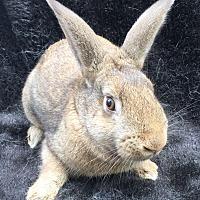 Adopt A Pet :: Twiggy - Watauga, TX