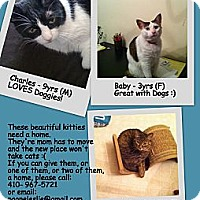 Adopt A Pet :: Charles - Randallstown, MD