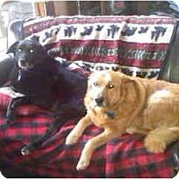Adopt A Pet :: Major - Columbia Falls, MT