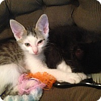 Adopt A Pet :: Brave Heart - Chandler, AZ